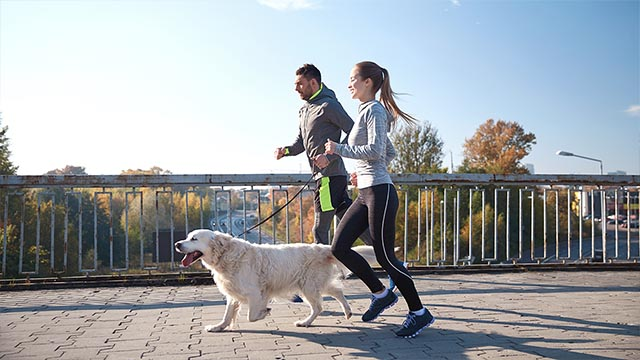 Couple excercising with a dog small image